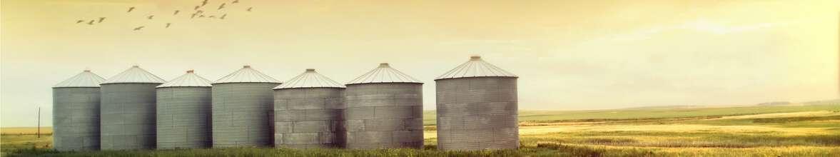 Estar conectado para comercializar bem no agronegócio