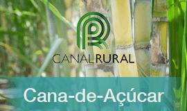 Moagem de Cana-de-Açúcar será a menor dos últimos cinco anos, aponta Datagro