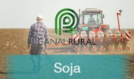 Apesar de avanço, vendas antecipadas de Soja seguem atrasadas em Mato Grosso