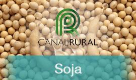 Safra de Soja deve atingir quase 118 milhões de toneladas