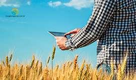 Greve e aumento de demanda sobre cotação do trigo