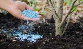 Saiba quais são os principais tipos de fertilizantes como escolher a opção para seu cultivo